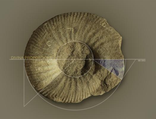 ammonite, ammoniet with typography