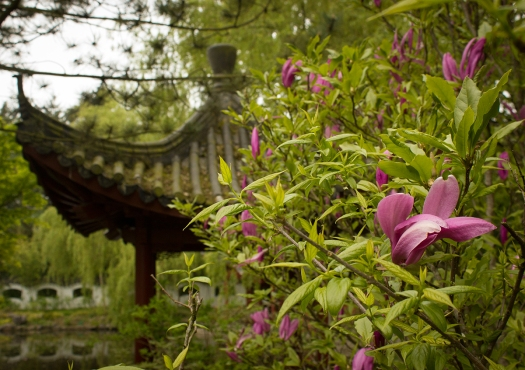 flowering shrub with roof (foto Eelco Bruinsma)